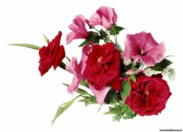 Чарівні, кохані жінки, – зі святом Вас 8 березня !